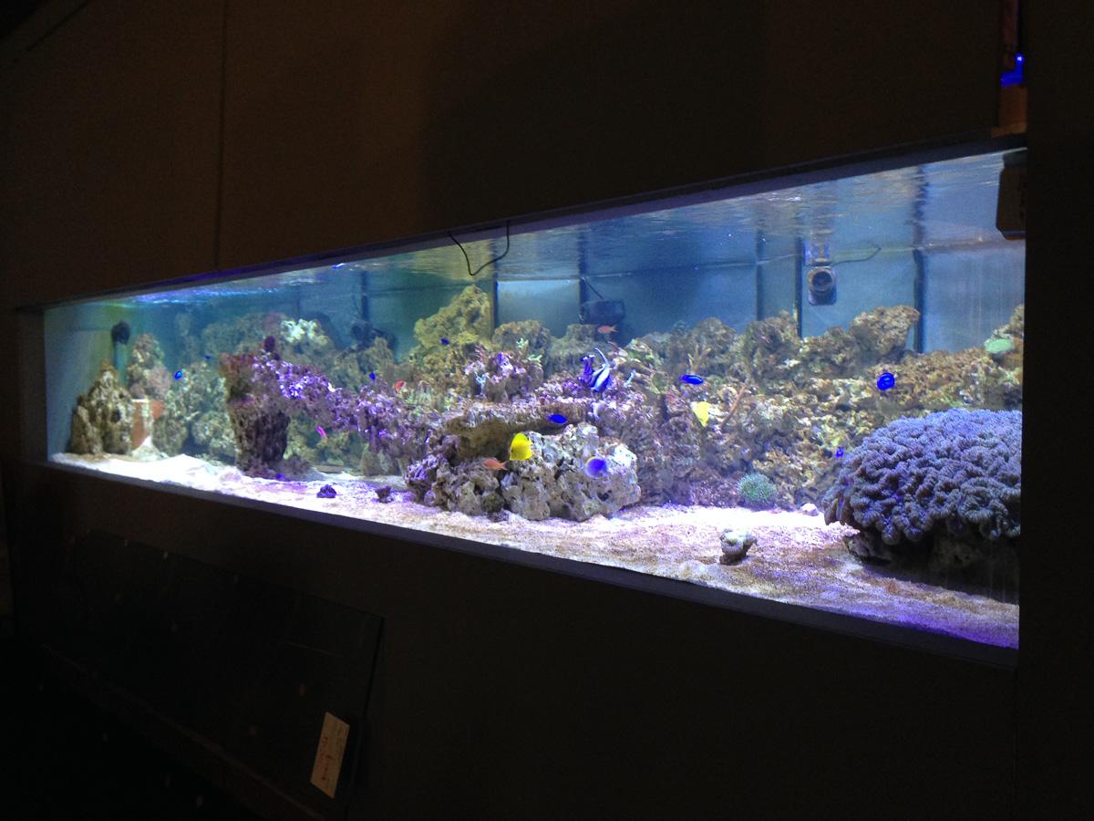 aquarium kosten anschaffung. Black Bedroom Furniture Sets. Home Design Ideas